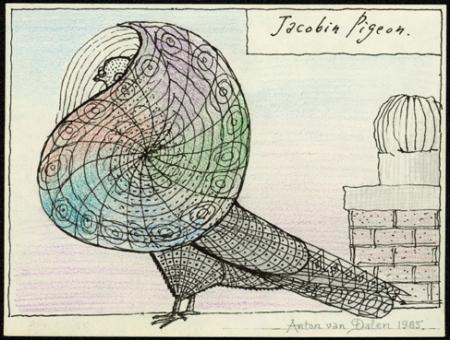 jacobin_pigeon_1985_wb