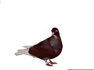 zbdepolonia1