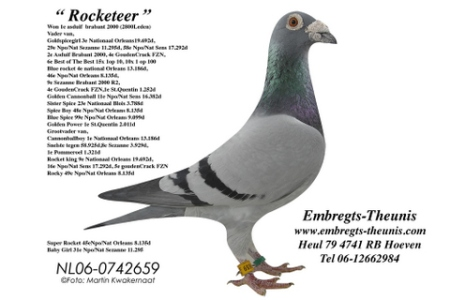 PetterTheunis06-duifRocketeer-2